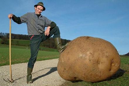 velik-krompir
