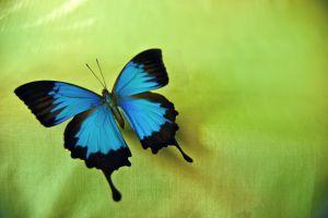 metulj.jpg