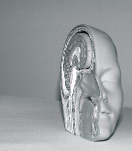 pol-glave